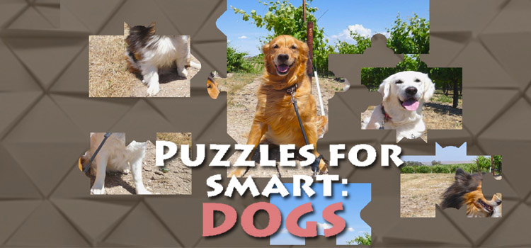 Puzzles For Smart Dogs Free Download Crack PC Game